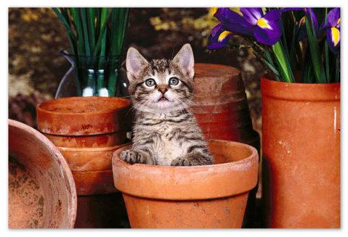 Кот в цветочном горшке.