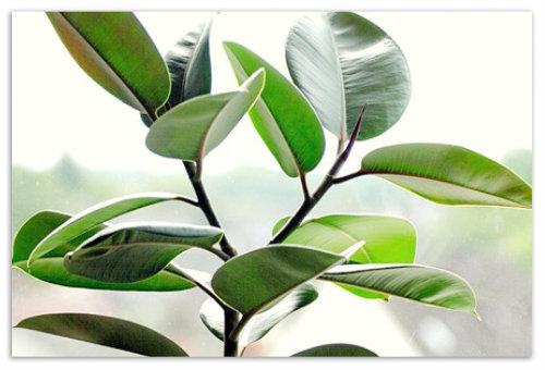 Расположение растения.