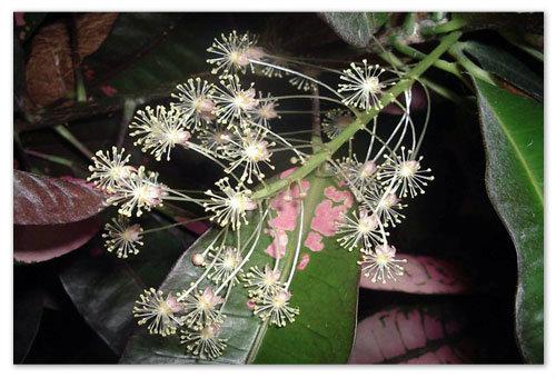 Цветочки маленькие и беленькие.