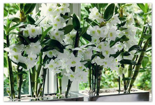 Размещение вазонов с цветами на окне.