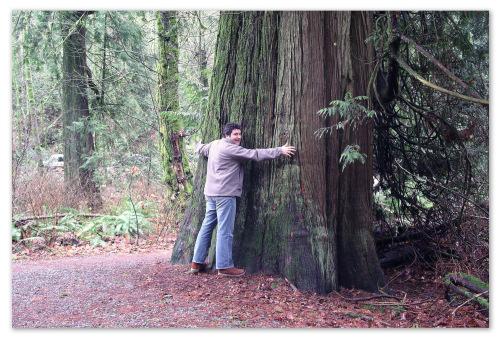 Гигантское дерево.