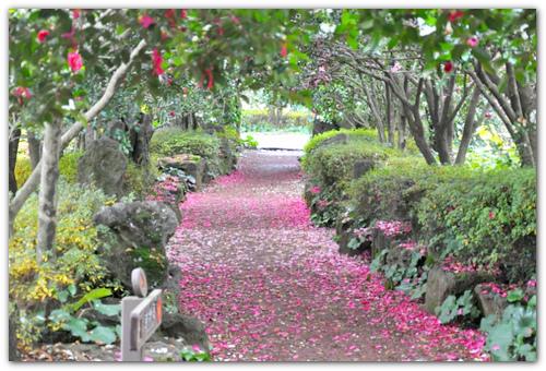 Camellia Hill.