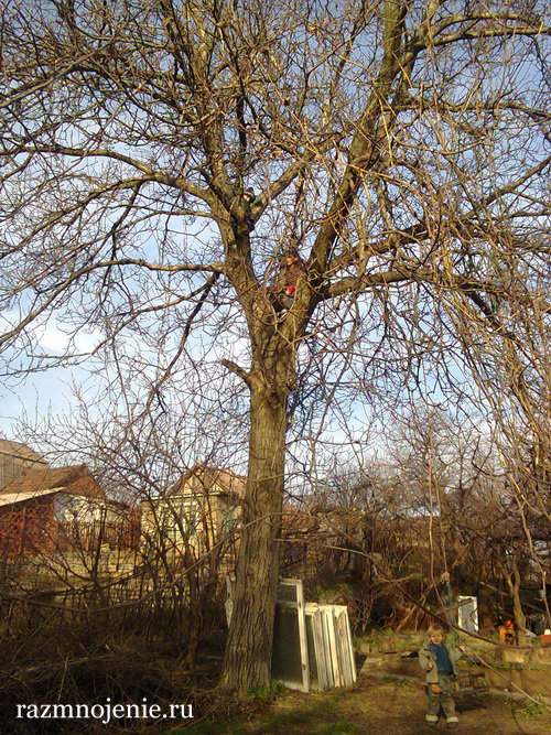 Дети и ореховое дерево.