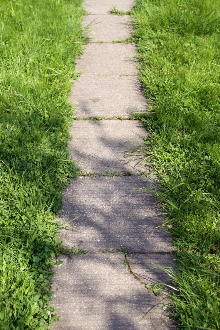 Дорожка заросла газонной травой.