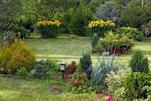 Магия рукотворных цветников из хвойников — не бойтесь «переформатировать» свои клумбы