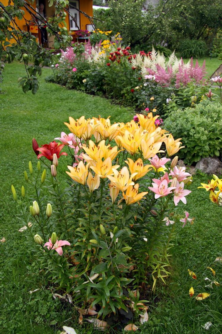 Берегите лилии от ветра и используйте дренаж для почвы.