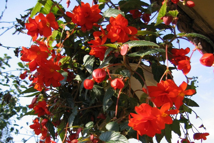 Какие цветы я сажаю на даче чтобы они