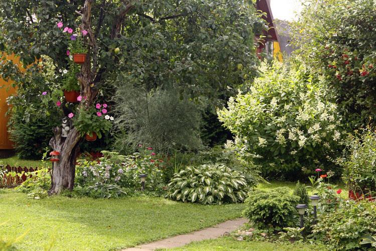 Кустарник садовой гортензии.
