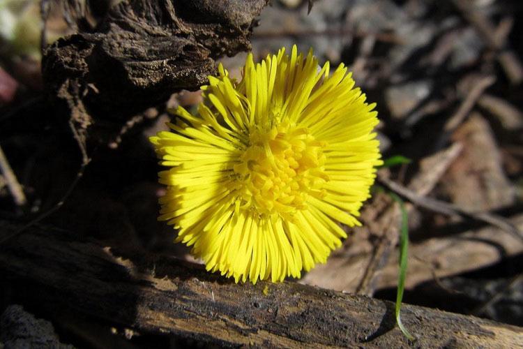 Жёлтый цветок.