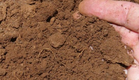 Как самостоятельно определить состав и кислотность почвы, не прибегая к услугам химлаборатории