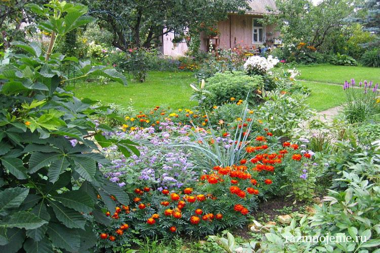 Бордюр из оранжевых цветов.