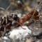 Избавиться от муравьёв навсегда сложно, но возможно, используя разные методы