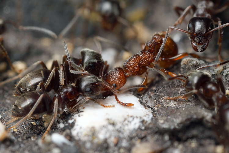 Хоть муравьёв иногда и бывает жалко, но на дачном участке они не нужны.