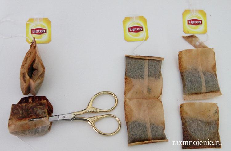 Последовательность подготовки чайных пакетиков для посадки рассады.