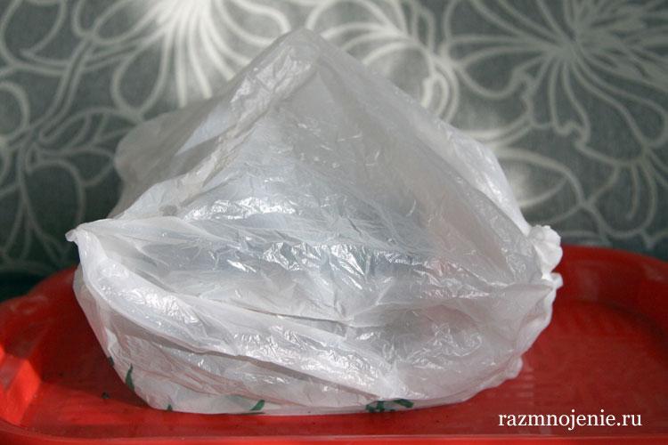 Накрываем горшочки целлофановым пакетом.
