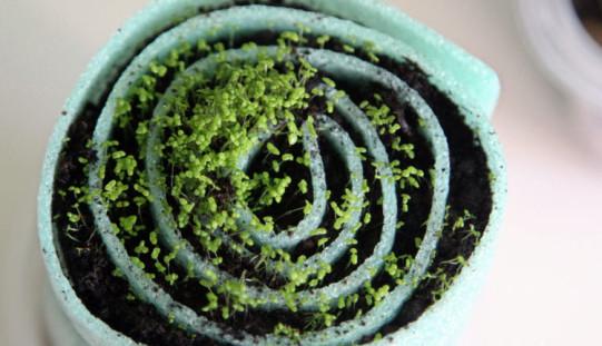 Традиционные и непривычные способы выращивания рассады однолетников