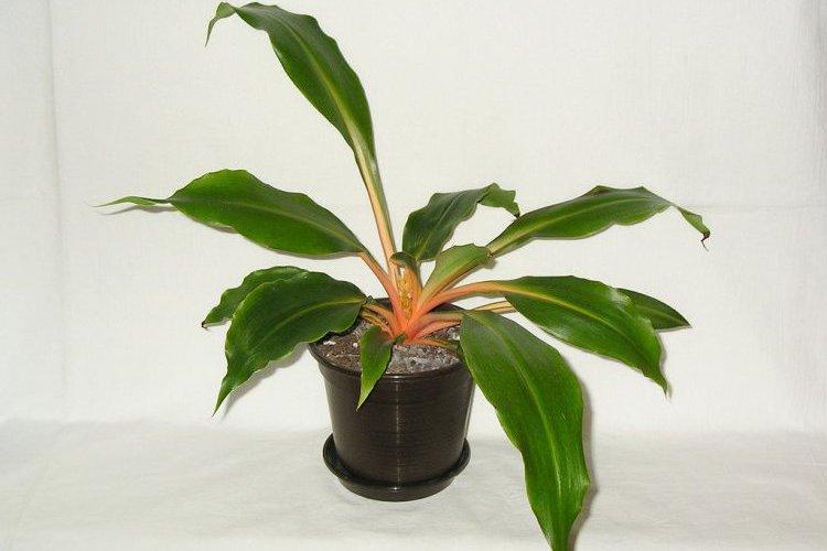 Комнатные растения. Фото: flickr.com/blumenbiene