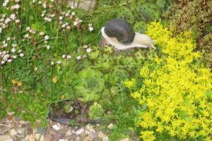 Почвопокровные растения на дачном участке облегчат труд и порадуют цветением