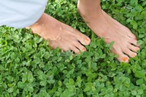 Низкорослая трава для идеального газона